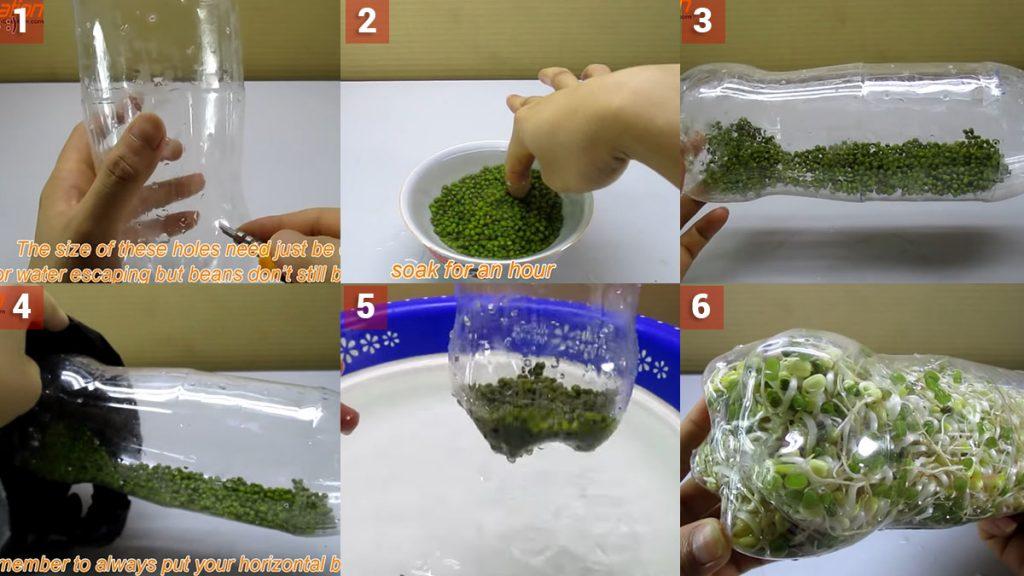 Kreasi DIY - Tanam Tauge Botol Plastik