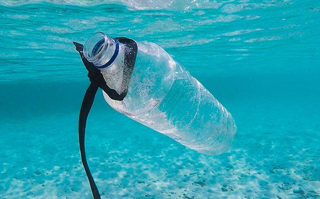 Foto Miris Hewan dan Plastik