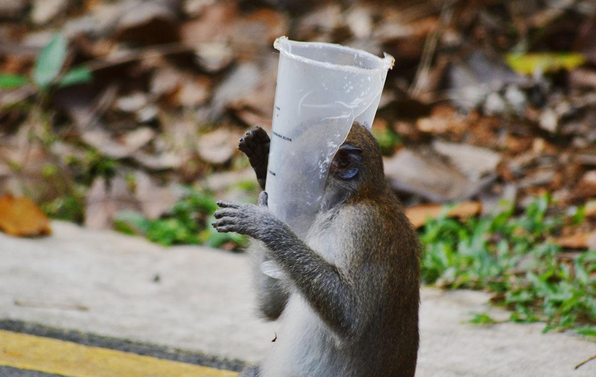 Monyet Bermain Plastik